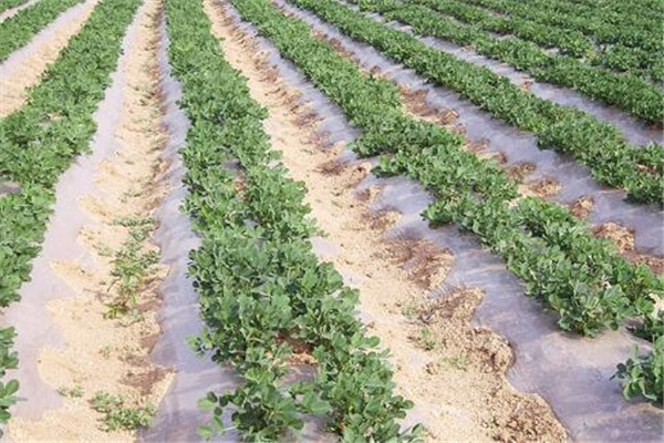 EVA农膜对于现代农业的贡献